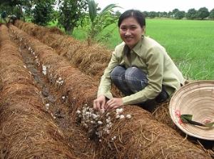 Hợp tác hóa việc phát triển trồng nấm