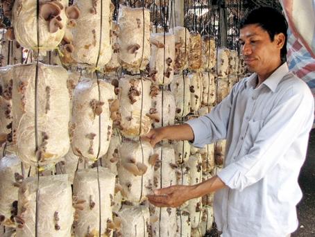 Trồng nấm, hướng đi đúng đắn cho nông dân Việt Nam